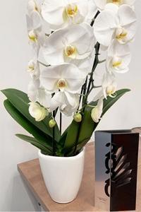 Biały kwiat w wazonie